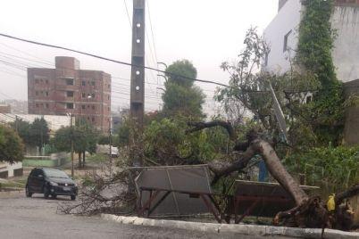 Árvore-São-Francisco.jpg