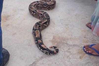 Cobra-em-Caruaru.jpg