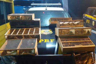 PRF-14.jpg