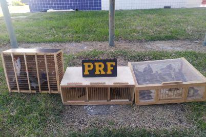 PRF-3.jpg
