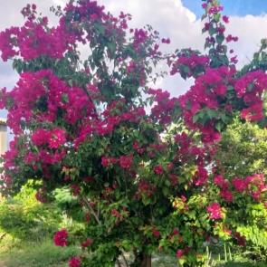Começa a Primavera, estação mais seca e quente em Pernambuco