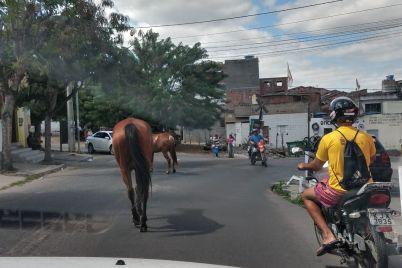 cavalo-2.jpg